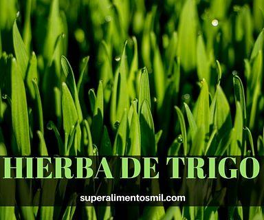 HIERBA DE TRIGO-WHEATGRASS