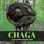 HONGO CHAGA