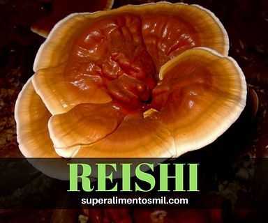 REISHI